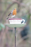 Tea cup Bird Feeders Wick Hutton Objets trouve
